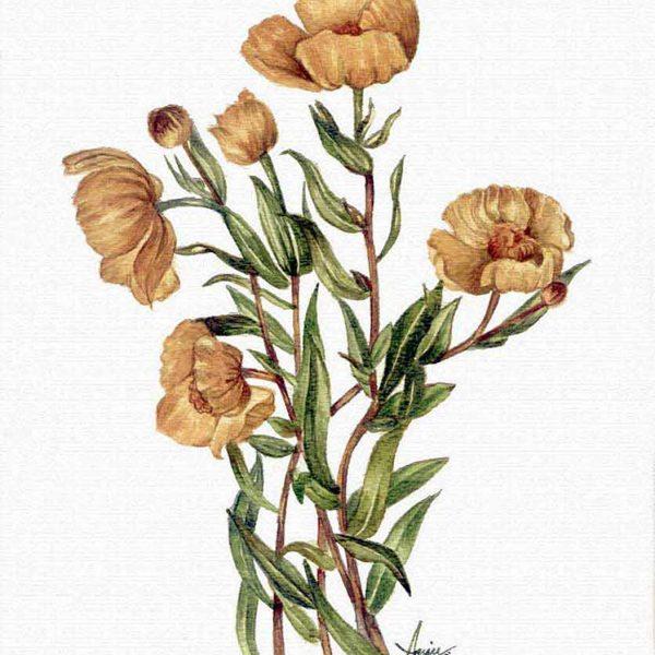 flowers-600x600.jpg