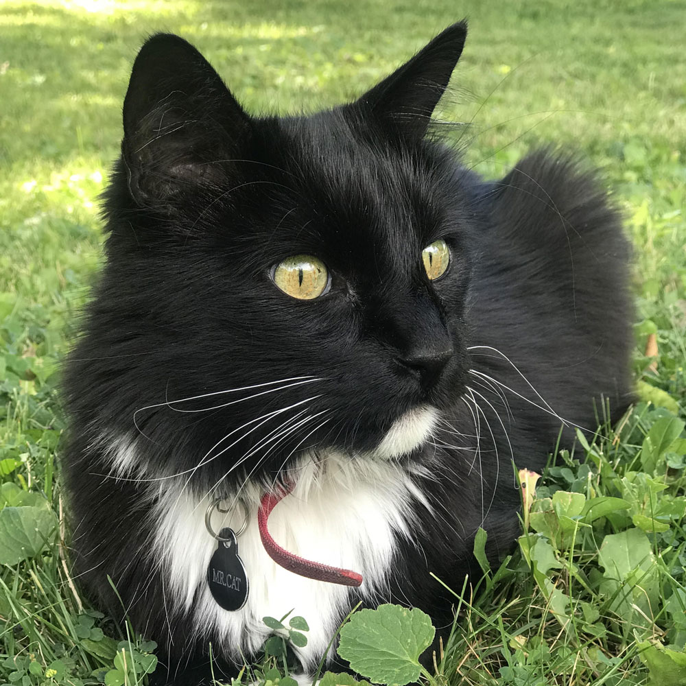 mr-cat-bio.jpg