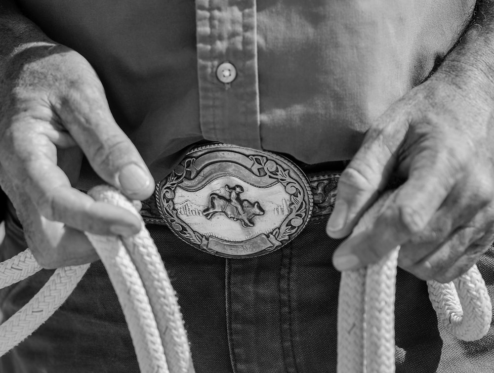 Wild Horse and Burro Training and Adoption Program
