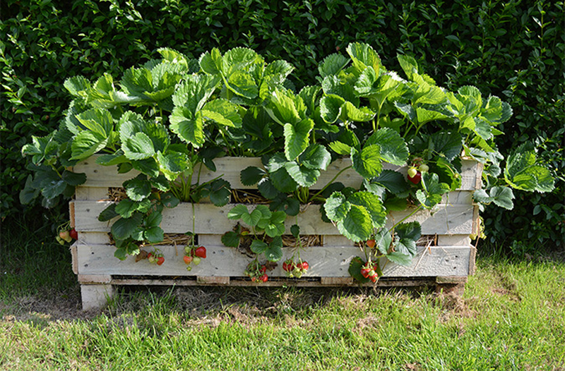 strawberry-pallet-planter-04.jpg