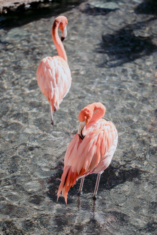 Flamingo Shoot4.jpg