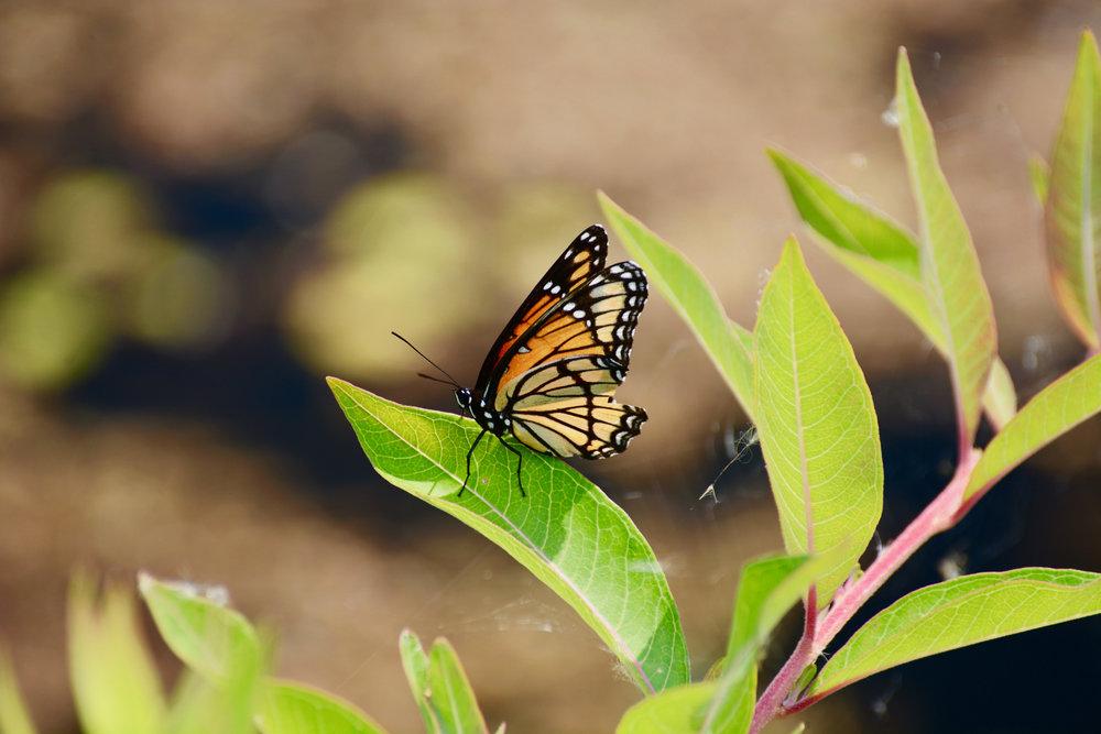 jeremy butterfly 2.jpg