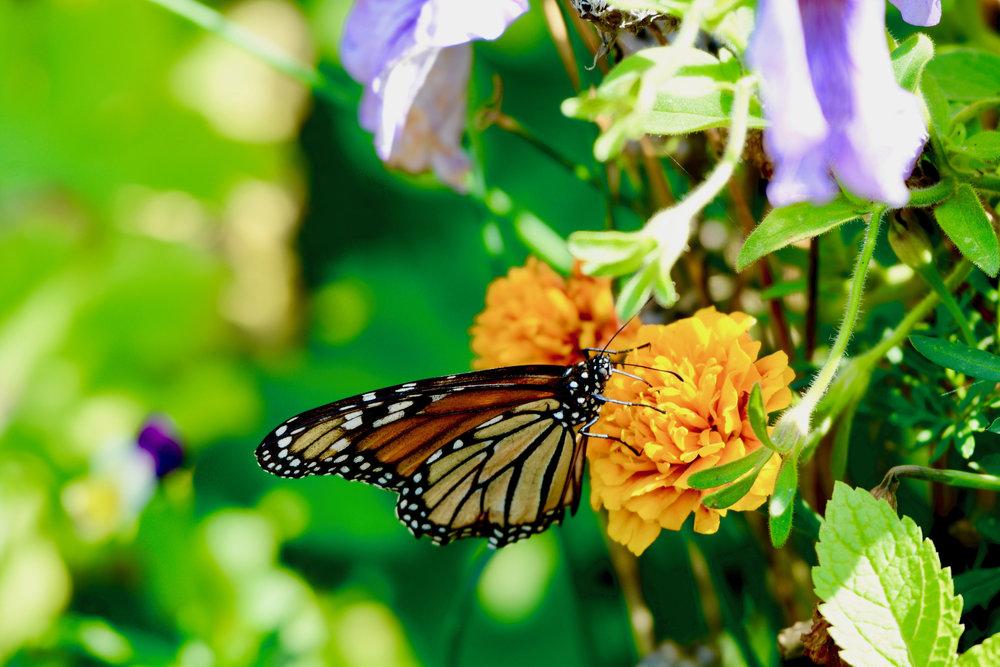 jeremy butterfly 3.jpg