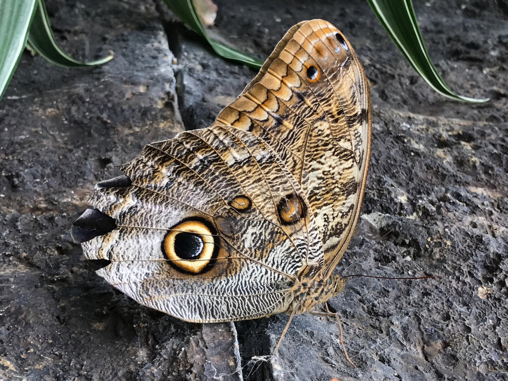 jeremy butterfly 4.jpg