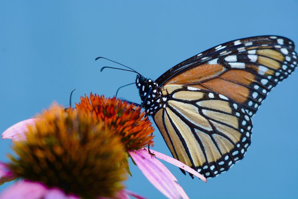 jeremy butterfly.jpg