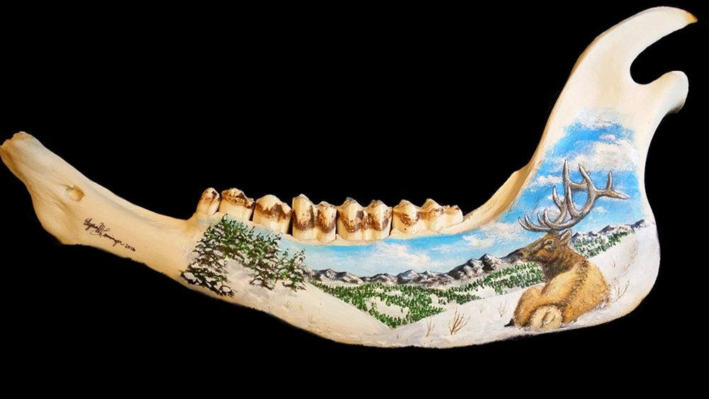 Bison Jaw Bone.jpg
