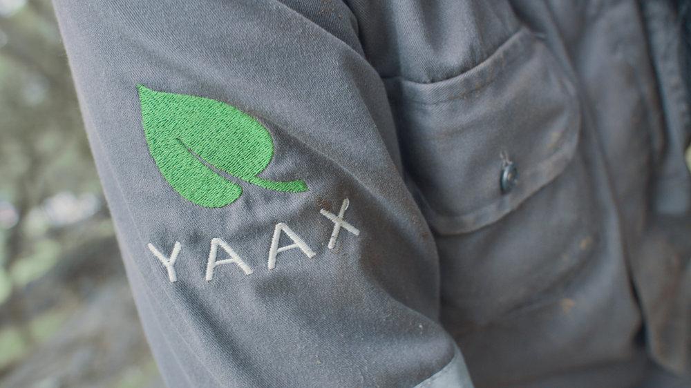 YAAX 8.jpg