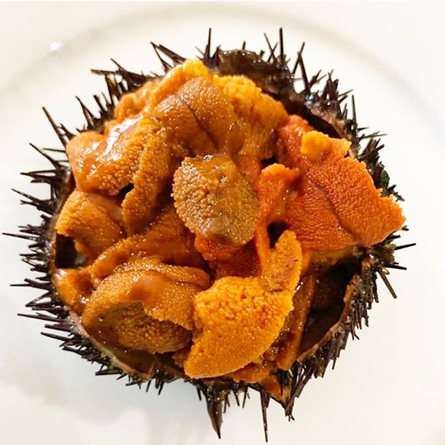 Sexy Fish 🐠- the Health Benefits of Sea Urchin are many: •Help improved virility and natural aphrodisiac 🥰 •Rich source of protein, which helps repair muscle tissues 💆🏻‍♀️ •Rich source of dietary fiber like oatmeal, oatbran and other whole grain ❣️ •Fibers help lower cholesterol, burns fat and prevent constipation 💥 •Good source of Vitamin C, which can prevent scurvy and stimulate collagen production 🍊 •Good source of Vitamin A which is beneficial for healthy skin and eyes 🧫 •Rich in zinc,a mineral that plays an important role in wound healing ✨ What it taste like 🤔: •Texture – creamy, a bit firm, light and buttery 🍯 •Scent – salty, fresh ocean scent 🌊 •Color – golden, mustard, orange 🧡 •Taste – sweet, clean 😋  Many people eat the meat of sea urchin raw or with crispy seaweed or sushi version 🍣 other include it in other dishes like pasta or fish stew 🍝I like it raw 😍 . . . #foodporn #food #foodie #foodstagram #instafood #foodphotography #foodgasm #foodlover #yummy #foodblogger #foodpics #delicious #instagood #foodpic #foodies #tasty #foods #yum #dinner #eat #foodpassion #foodblog #foodtruck #healthyfood #foody #foodgram #eeeeeats #breakfast #lunch #francescathemethod @rex.goldsmith