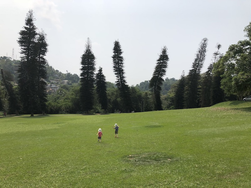 Told you it won't always match the text, but check out the size of this. Peradeniya Botanical Gardens. Photo © Szilvia Molnár