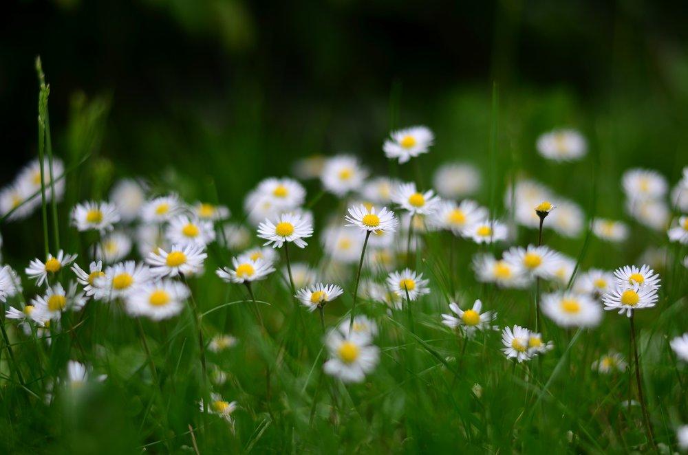 flower-2365910_1920.jpg