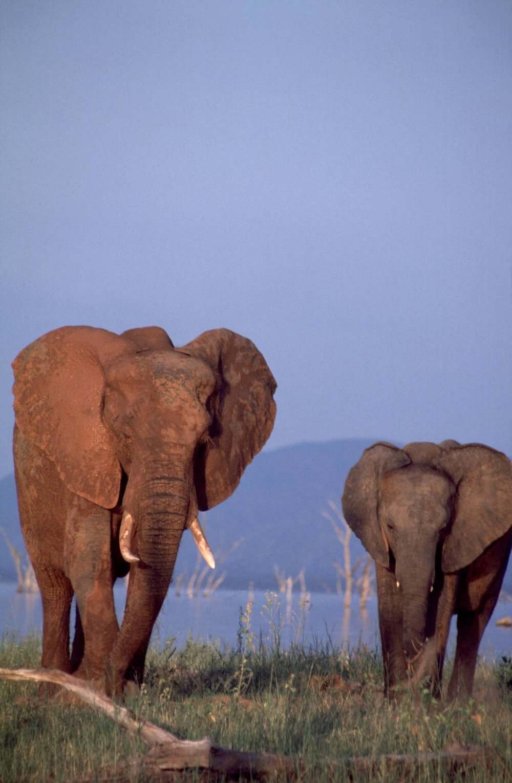 elephants+60.jpg