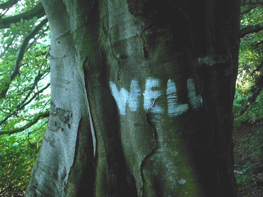 The Well Tree