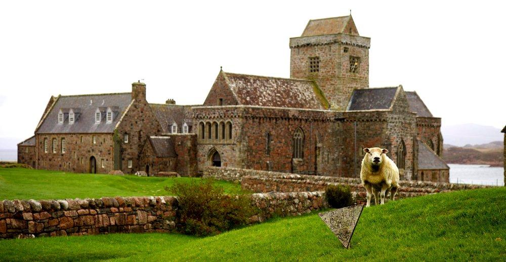 Iona+church+w+sheep.jpg