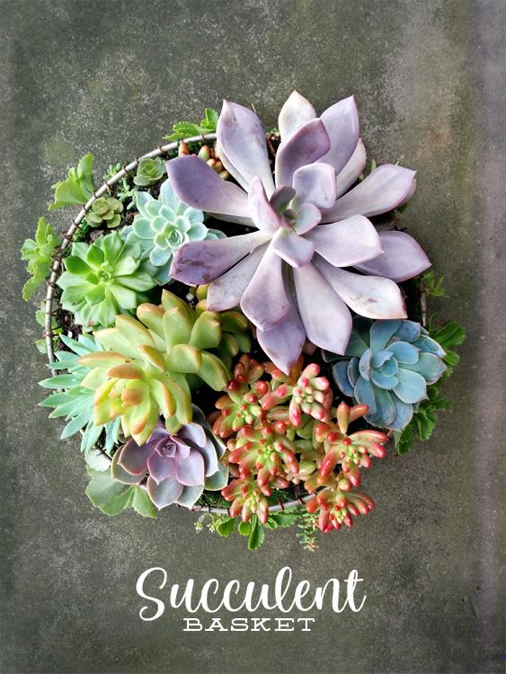 SucculentBasketNew_150403.jpg
