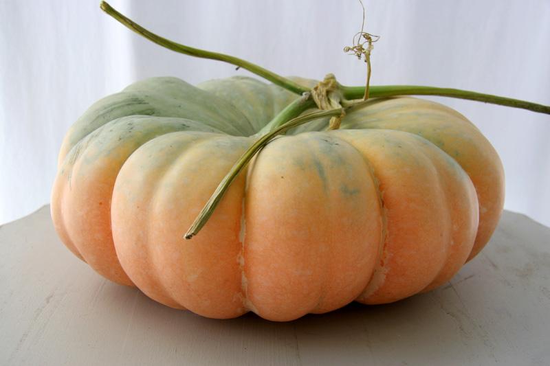 Pumpkin_9736.jpg