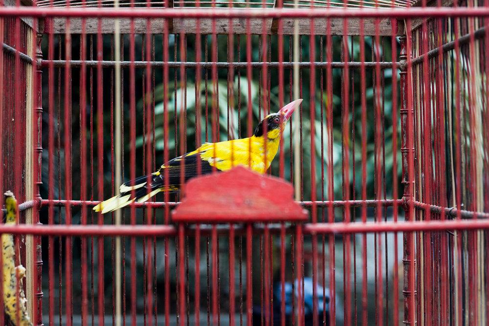 Birdmarket-2.jpg