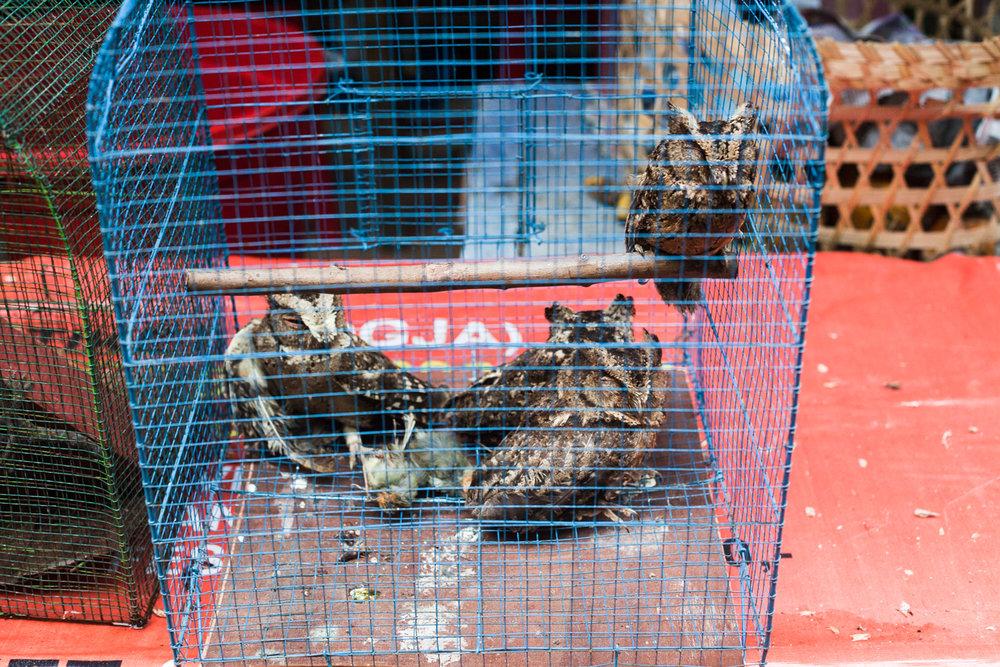 Birdmarket-5.jpg