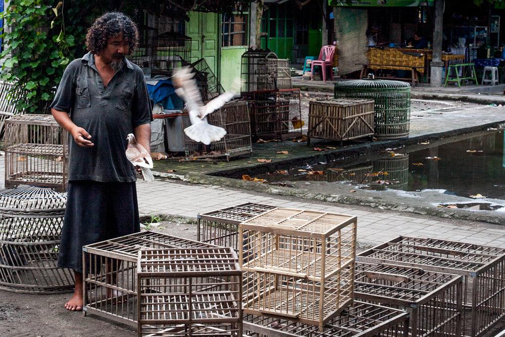 Birdmarket-3.jpg
