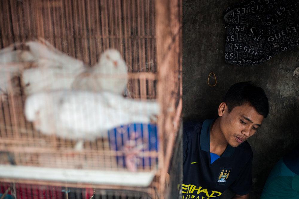 Birdmarket-21.jpg
