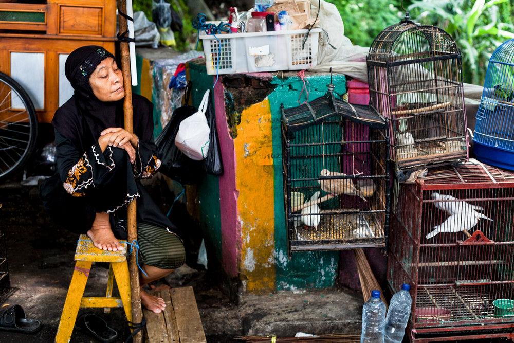 Birdmarket-25.jpg