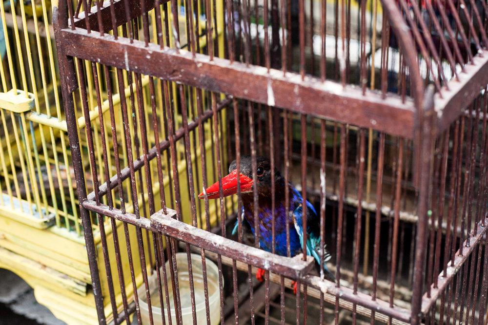 Birdmarket-28.jpg