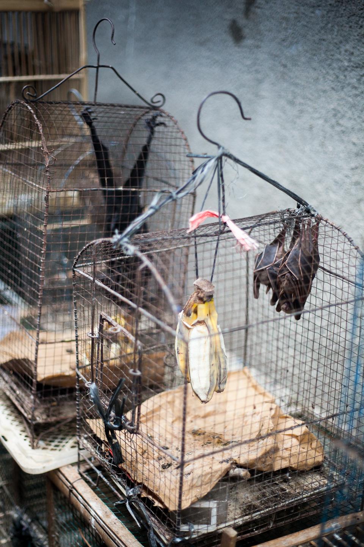 Birdmarket-9.jpg