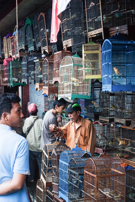 Birdmarket-11.jpg