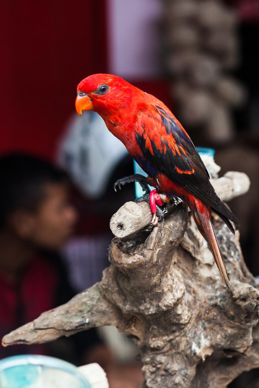 Birdmarket-32.jpg