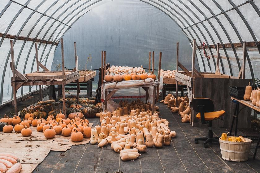 Farm Life-17.jpg