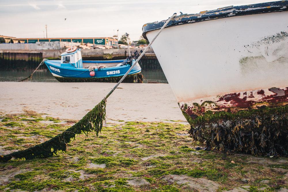 seaweed, shoreham-by-sea, sussex, 2016