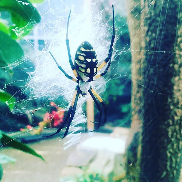Had a great time #exploring the @butterflypavilion at #night ! #bug #insect #spider #orbweaver #familygoals #cricketsarefood