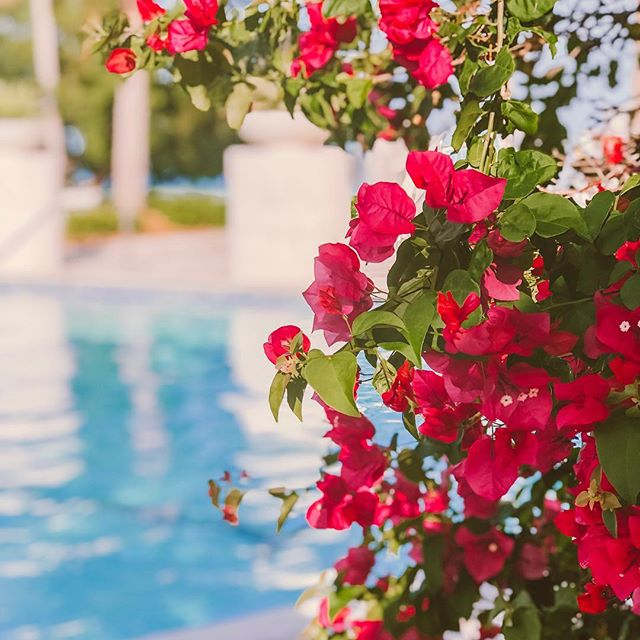 Daily dose of beauty + sunshine 🌞 @playalargo 💕 📸 by @misskeriv . . . . #fortlauderdale #aliciaweaverdesign #floral #outdoordesign #outdoorliving #floridakeys #keylargo #vitaminc #pooltime #landscapedesign #interiordesign