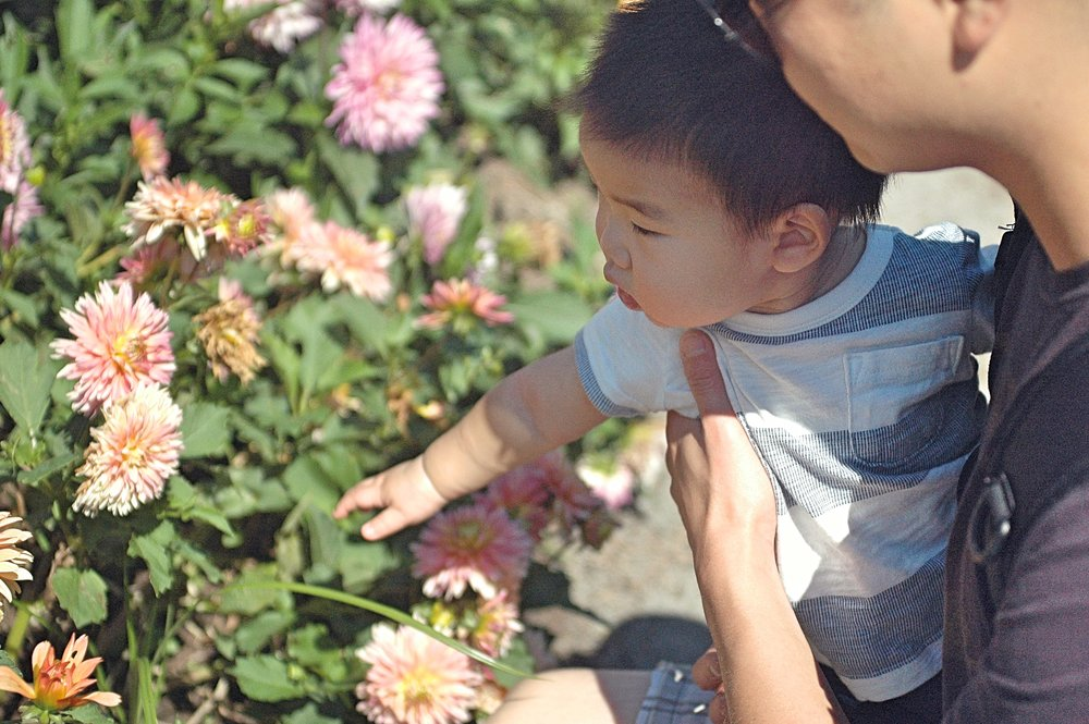 dash flowers.jpg