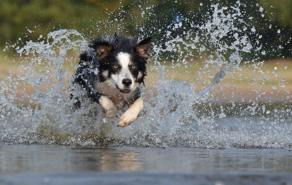 cherry creek state park dog park denver realtor