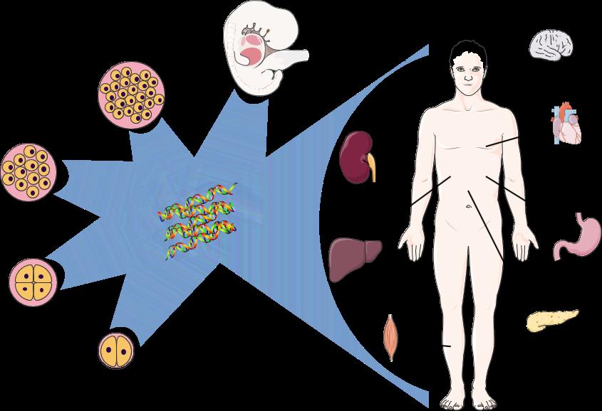 Onder, Sidoli et al. Expert Review of Proteomics (2015)