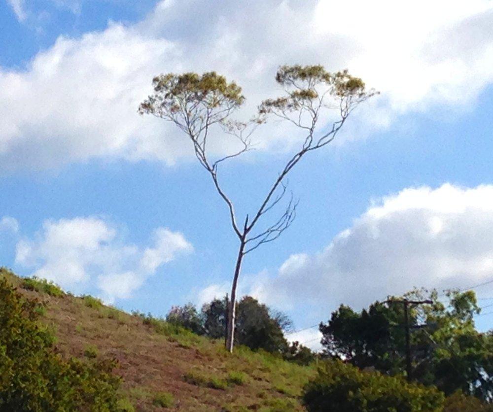 heart+tree+copy.jpg