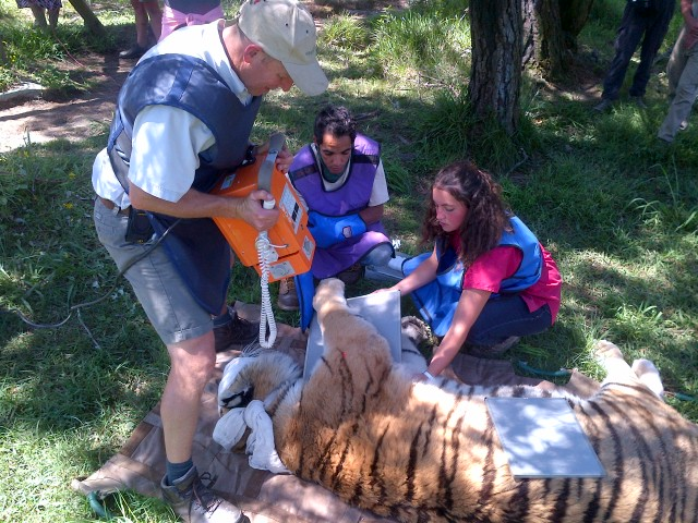 Ubuntu Package:   Sponsor 1 Lion  Regular updates on the sponsored Big Cats.  Corporate shirts and branded merchandise that would be sent to the office.