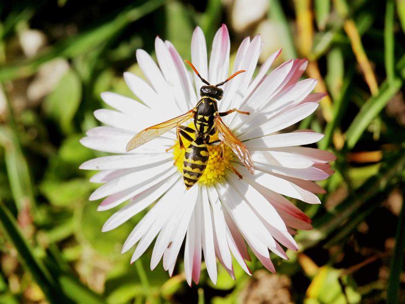 Wasp detail.jpg