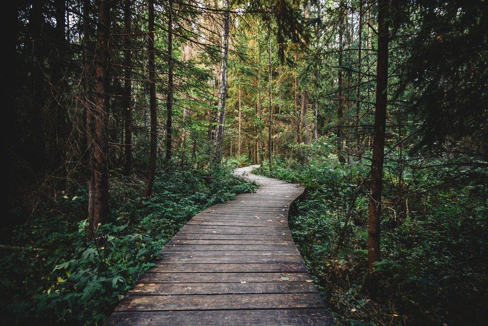 wood-nature-walking-dark.jpg