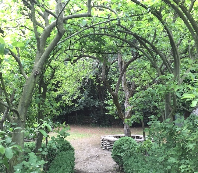 25-and-under-arching-trees.jpg