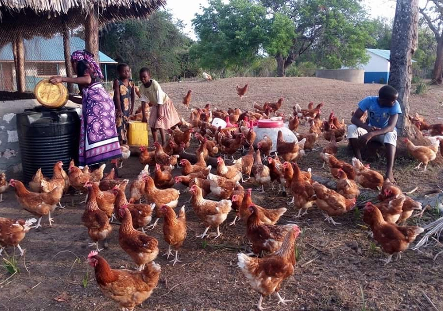 The Funzi and Bodo Trust chicken farm offers opportunities to teach children and adults about agriculture