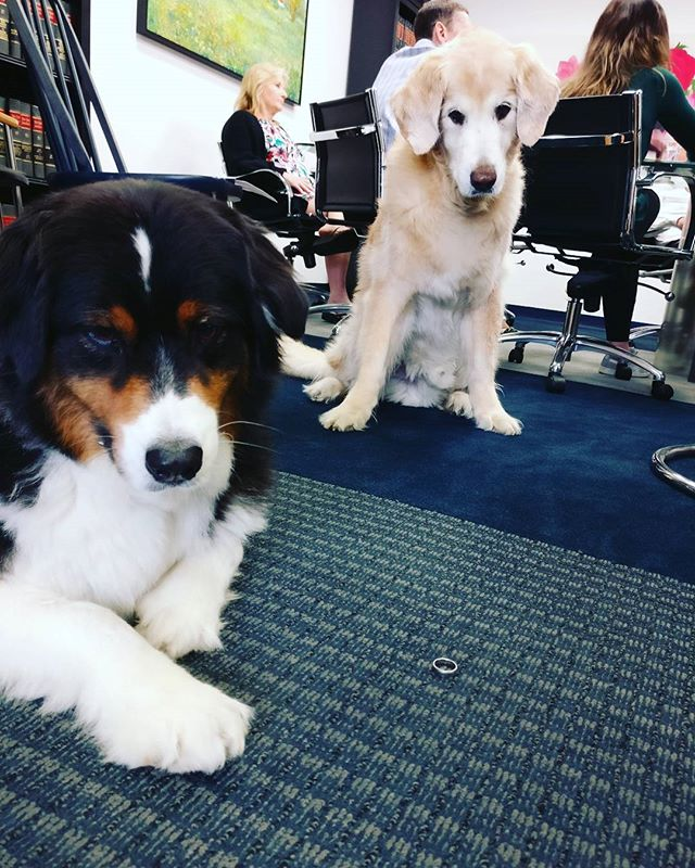 Are you a newlywed? Or engaged?  Want to know how taxes will impact you?  The G+G #complaintsdept can help (link in bio) #officedogs #dogsoftheday #dogsofnyc #uws #uwsdog #dogs #buzzfeeddogs #dogstagram #accounting #cpa #nycofficedogs #nyc #marketingdog #dogoftheuws #centralparkpaws #dogsofig #dogsofinsta #dogloversfeed #doglovers #doglove #upperwestside  #barks