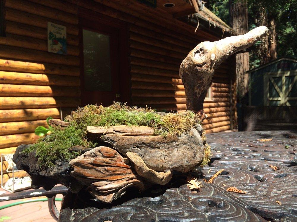Moss Duck