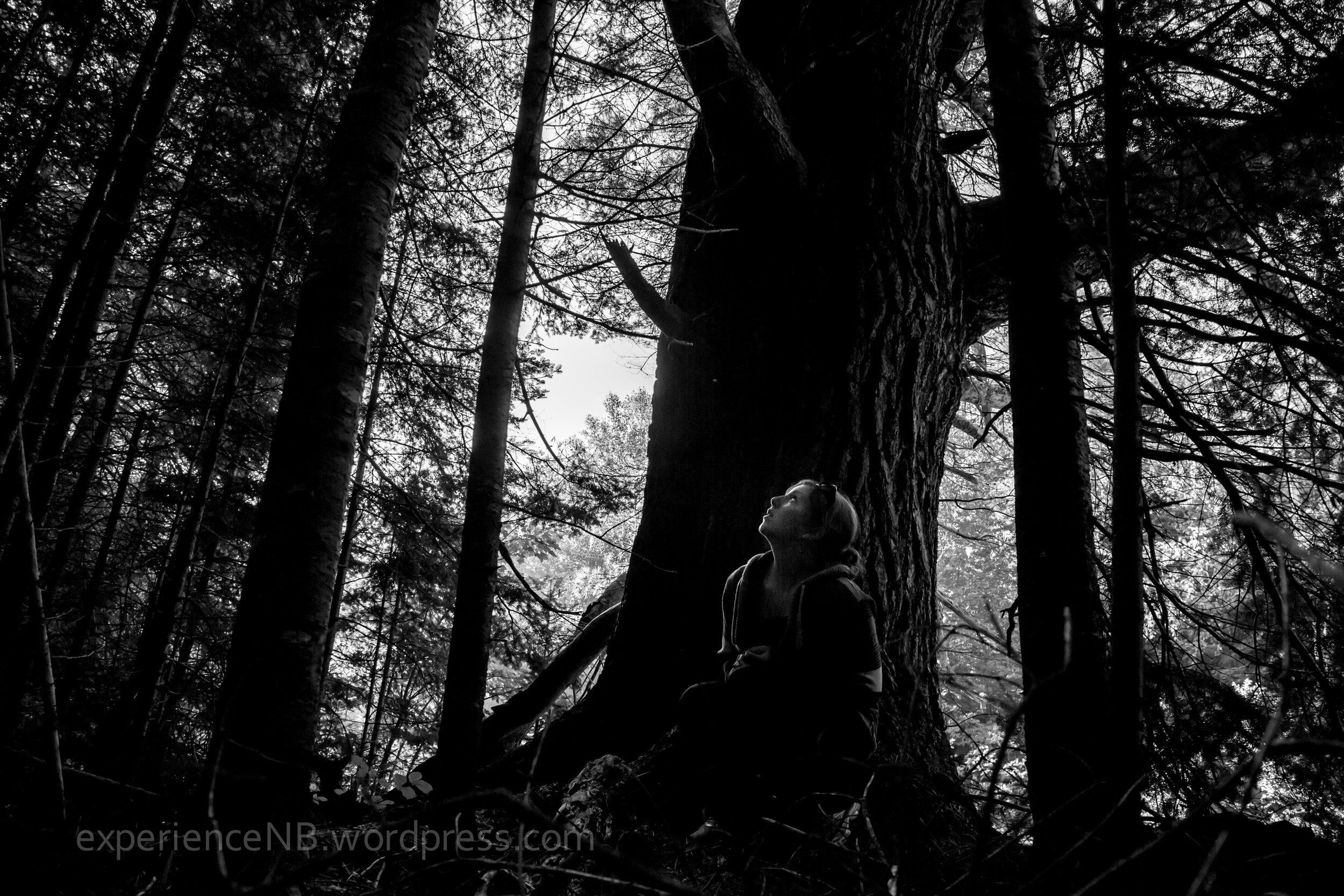 TreeHouseCamping_Miramichi_Aug29-31.2013-59.jpg