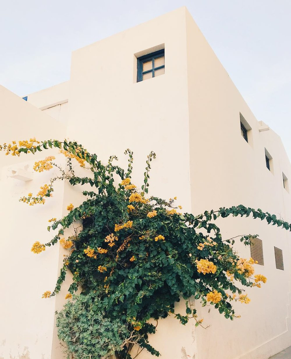 A plant grows from the closed market building in the centre of Corralejo, Fuerteventura