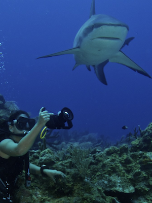 cayuco-reef-divers-shark-diving-300x400.png