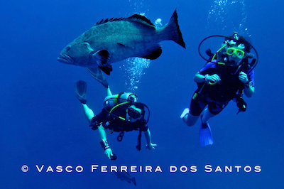 Try SCUBA / Discover - starts at $60