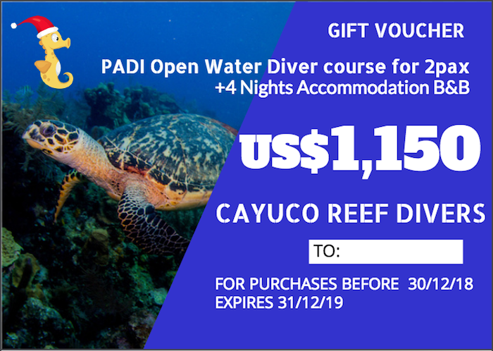 PADI OWD course + 4 Nights B&B    For 2 persons. Taxes included.    Para 2 personas. Impuestos incluídos.