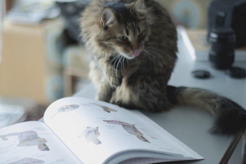 BOOK_YOGA_CATS.jpg