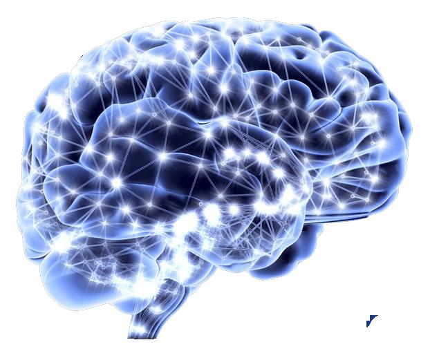kisspng-human-brain-neuroscience-neuron-homo-sapiens-mind-wave-5b123cdd3d7c78.9141228015279218852519.png